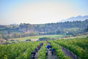 Yonder Hill Wines