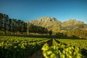 Thelema Mountain Vineyards
