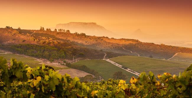 Kaapzicht Wine Estate